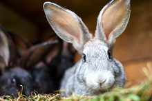 Cute Gray And Brown Rabbit In ...
