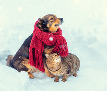 Cat And Dog Are Best Friends. A Cat And A Dog Walk On The Outdoors In A Snowy Winter. The Dog In A Warm Scarf, The Cat Rubs The Dog