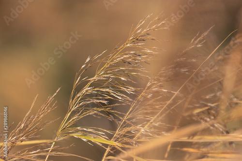 Fotografie, Obraz  Grashalme im Wind
