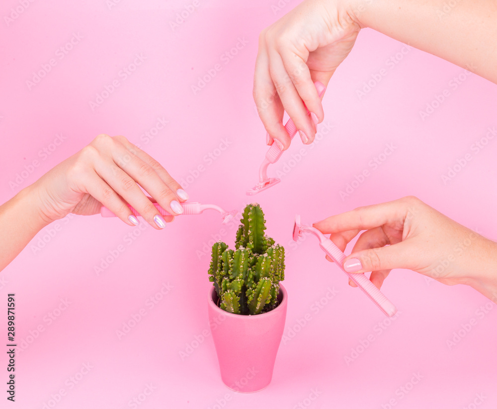 Fototapeta Three hands on a pink background shave a cactus in a pink pot.