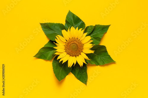 Photo sur Aluminium Tournesol Beautiful fresh sunflower with green leaves on bright yellow background. Flat lay, top view, copy space. Autumn or summer Concept, harvest time, agriculture. Sunflower natural background. Flower card
