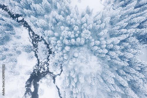 zimowy-las-gorski