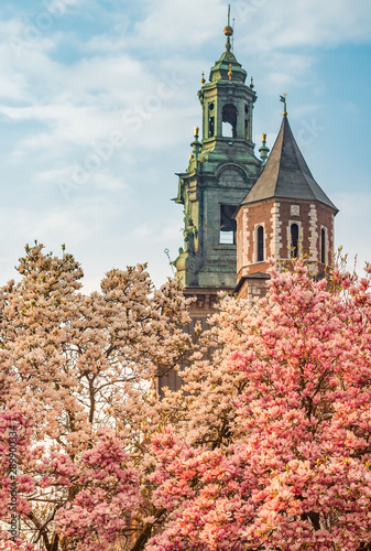 wawel-cathedral-towers-and-blooming-magnolia-tree-spring-krakow-poland