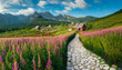 mountain landscape, Tatra mountains panorama, Poland colorful flowers and cottages in Gasienicowa valley (Hala Gasienicowa), summer