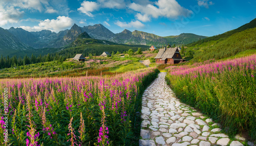 Photo Stands Floral mountain landscape, Tatra mountains panorama, Poland colorful flowers and cottages in Gasienicowa valley (Hala Gasienicowa), summer