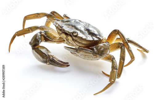 crab isolated on white background Canvas Print