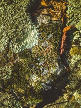 A Vertical, Portrait View Of V...