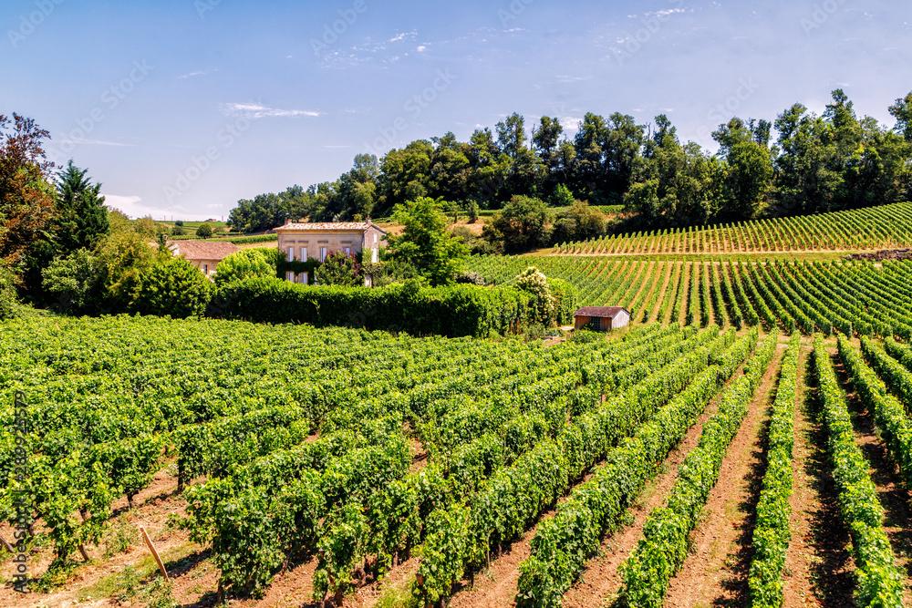 Fototapeta Vineyards of Saint Emilion, Bordeaux, Aquitaine region of France, in a sunny summer day.