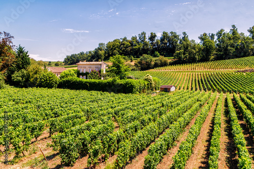 Photo Vineyards of Saint Emilion, Bordeaux, Aquitaine region of France, in a sunny summer day