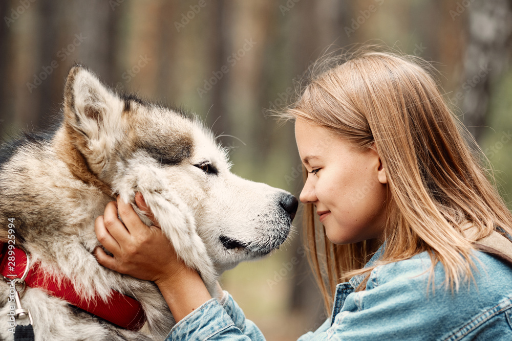 Fototapeta Young Girl with her Dog, Alaskan Malamute, Outdoor at Autumn. Domestic pet