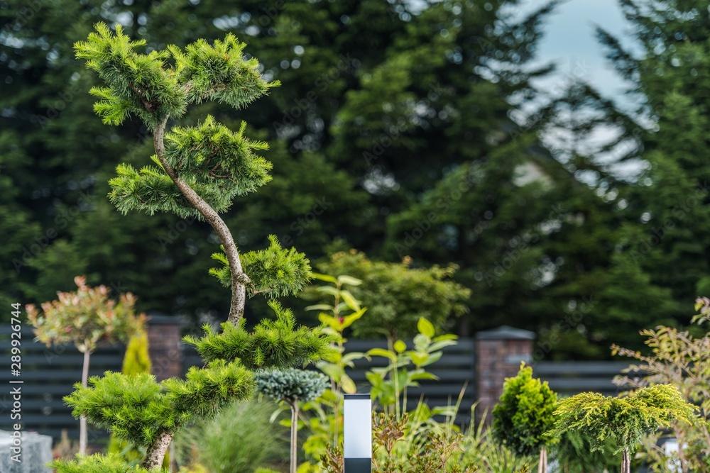 Fototapety, obrazy: Exotic Garden Trees