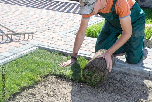 Fond de hotte en verre imprimé Saumon Landscape Gardener Laying Turf For New Lawn