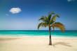 Sunny tropical exotic Caribbean paradise beach.
