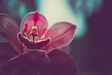 Close-up Of Orchidaceae. Vintage Style.