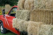 Close Up On Stacking Dry Hay On The Old Truck