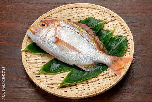 Photo 黄鯛