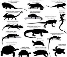 Collection Of Silhouettes Of Reptiles: Iguana, Perentie, Chameleon, Gecko, Lizard, Basilisk, Tortoise, Turtle