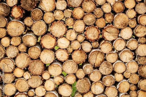 Foto auf Gartenposter Brennholz-textur Tree stumps background. Pieces of teak wood stump background. Round teak wood stump. Round teak woods trees circle stumps cutted group. Deforestation