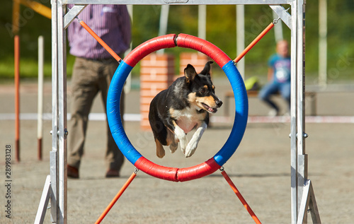 Dog jumping on an agility training tire on a dog playground Canvas Print