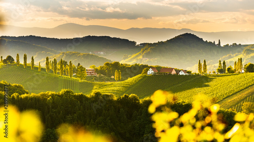 Poster Jaune South styria vineyards landscape, near Gamlitz, Austria, Eckberg, Europe. Grape hills view from wine road in spring. Tourist destination, panorama