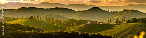 Spoed Foto op Canvas Panoramafoto s South styria vineyards landscape, near Gamlitz, Austria, Eckberg, Europe. Grape hills view from wine road in spring. Tourist destination, panorama