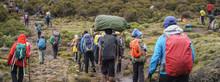 Trekkers Climbing Mount Kilimanjaro, Kilimanjaro National Park, Tanzania
