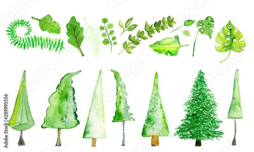 Fototapeta  Bäume und Blätter in Aquarell