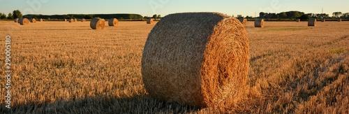 Foto fardos de paja en el campo