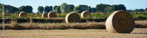 Valokuva fardos de paja en el campo
