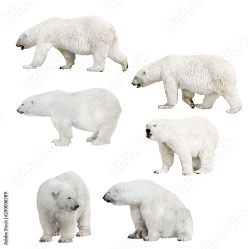 Fond de hotte en verre imprimé Ours Blanc six isolated polar bears