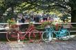 bicycles garden