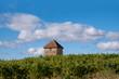 languedoc vineyard with farm store, near Murveil Sur Beziers, Languedoc, France