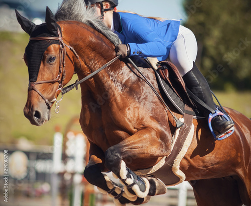 A Bay beautiful horse with a gray mane jumps high at horse show jumping competitions with a rider in a blue suit in the saddle.