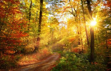 FototapetaColorful autumn forest