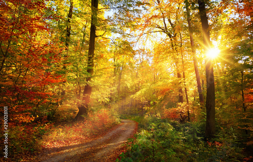Canvas Prints Trees Colorful autumn forest