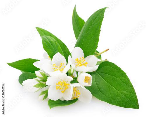 Valokuva Fresh jasmine on white background