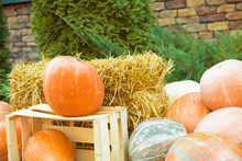 Pictures Orange, Autumn Pumpkins In The Manger