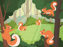 Squirrel In Forest. Wild Anima...