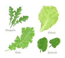 Salad Leaves Set. Spinach, Aru...