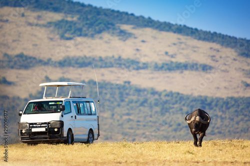Safari concept. Safari car with buffalo bison in african savannah. Masai Mara national park, Kenya.