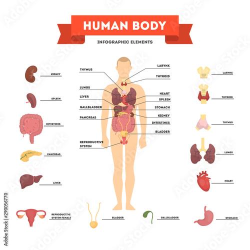 Human anatomy concept. Male body with set of internal organ Fototapeta