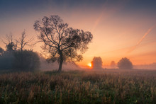 A Tree During A Misty Sunrise ...