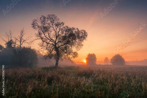 Poster Marron chocolat A tree during a misty sunrise near Piaseczno