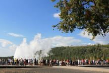 Old Faithful Geyser Eruption In Yellowstone