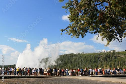 Fototapeta  old Faithful geyser eruption in Yellowstone