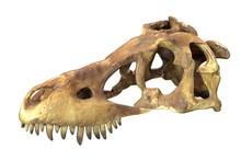 3D Render Of Tyrannosaurus Rex...