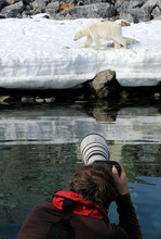 Person Take Photograph Of A Polar Bear