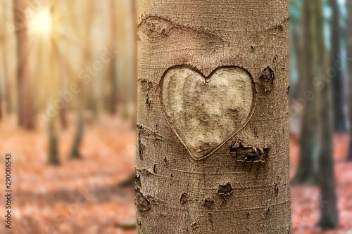 autumn tree with heart Slika na platnu