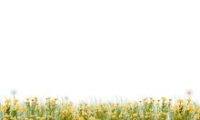 Meadow On A White Background G...
