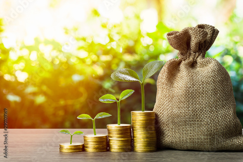 Fototapeta Making money and money investment, Savings concept. A plant growing on rising stack of coins with money bag and nature background. Depicts long-term investment And wealth and financial stability. obraz